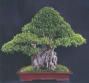Horticulture Landscaping Bonsai